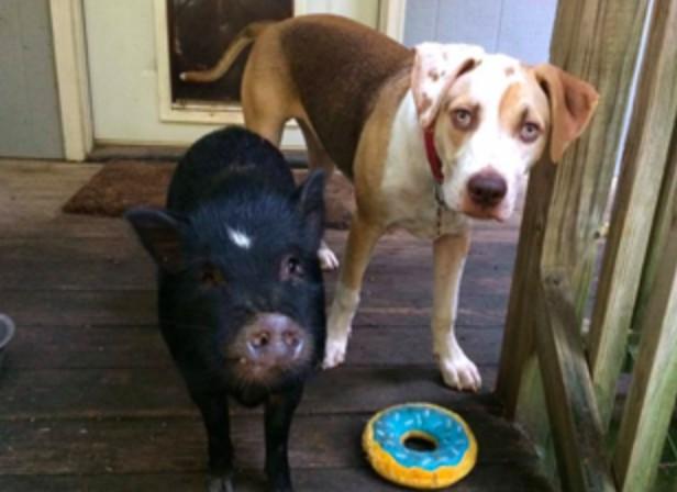 kevin&Piggeldy